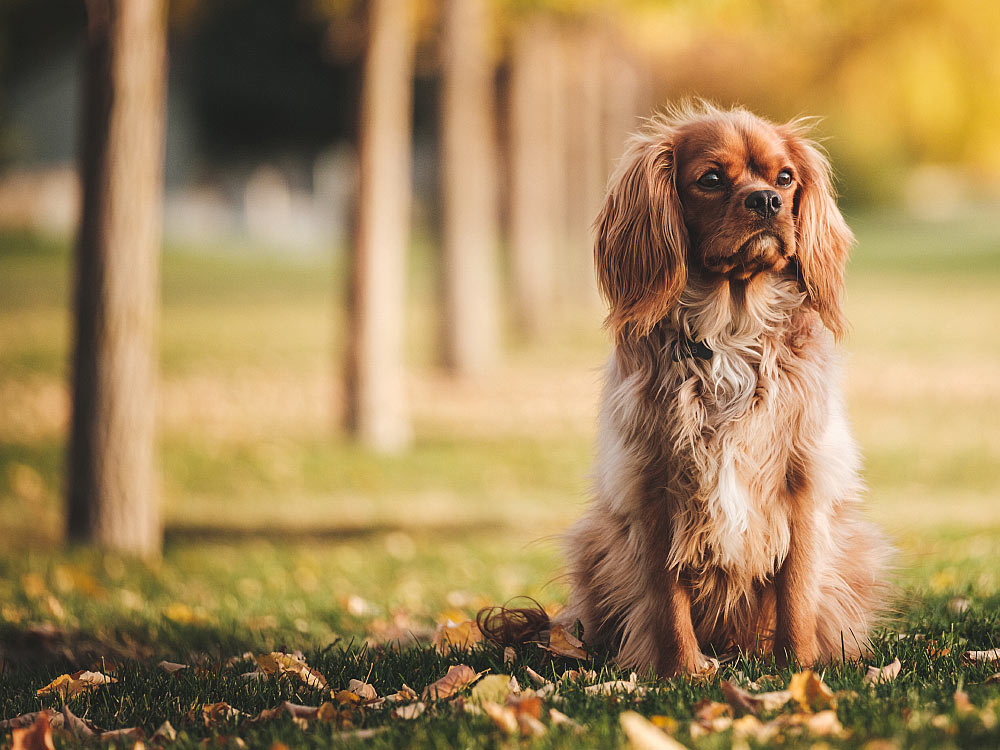 4 Reasons to take your Dog to a Veterinary Neurologist