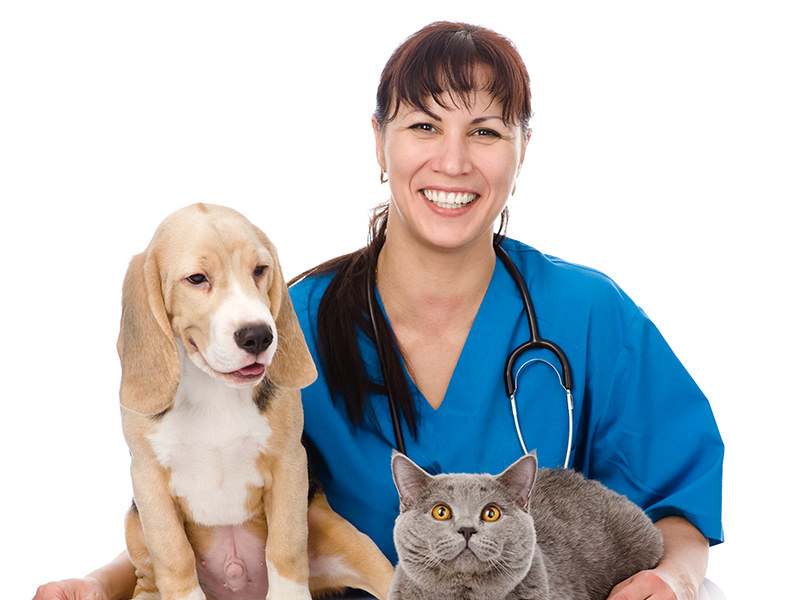 How to Spot the Right Vet Clinic for Your Pet