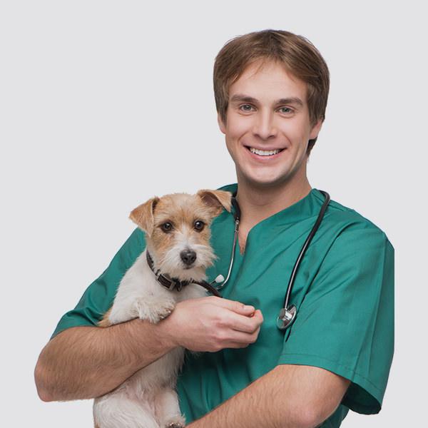 ask a vet