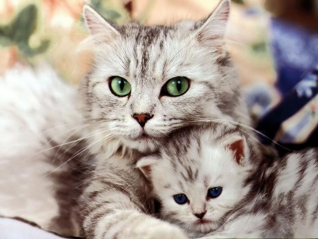 weaning a kitten