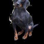 Dog Vomiting And Diarrhea