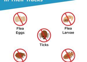 Flea Tick Frontline spot on Dogs
