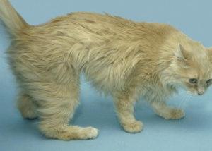 Cat Plantigrade Stance