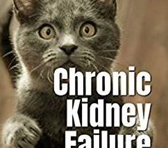 chronic renal failure in cats
