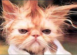 Cat anxiety symptoms