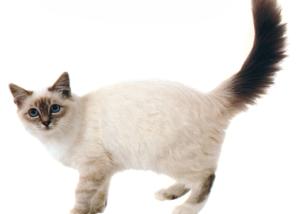 IBD in cats
