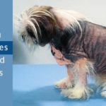 Common Skin Diseases in Dogs
