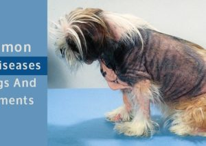 Common Skin Diseases in Dogs and Treatments