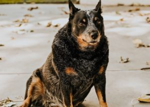 7 Ways to Care for Your Disabled Dog