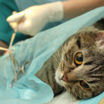 4 Reasons Why Spaying or Neutering your Pet is a Must